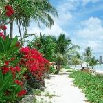 セブ島 イメージ