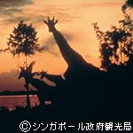 タモン地区 イメージ