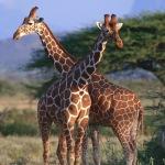 アフリカ イメージ